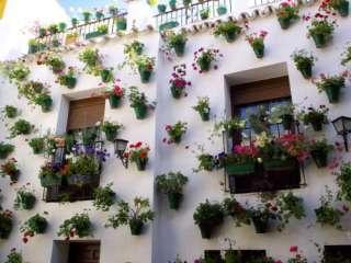 de bekende patios in het voorjaar