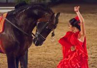 dansen met paarden Andalusie