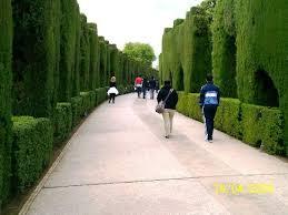 alhambra cipresbomen