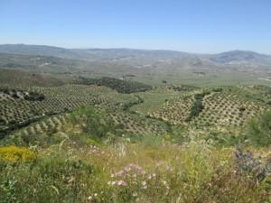 voorjaar in Andalusie,