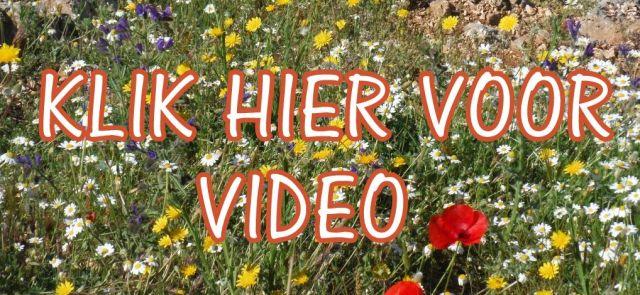 video vakantiehuis
