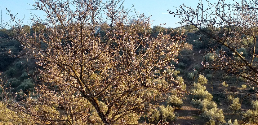 bloemen notenbomen